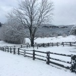 Snow at Woolshed Cabins